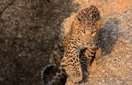 Bera: The Indian village where man and leopard have co-existed for more than a century